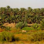 قضاء الهاشمية في محافظة بابل