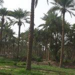 مدينة الدجيل في محافظة صلاح الدين
