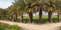 مدينة العباسية في محافظة النجف