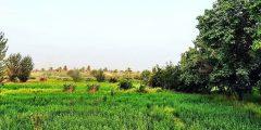 ناحية العلم في محافظة صلاح الدين