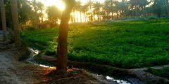 مدينة الحرية في محافظة النجف