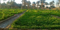 مدينة المشخاب في محافظة النجف