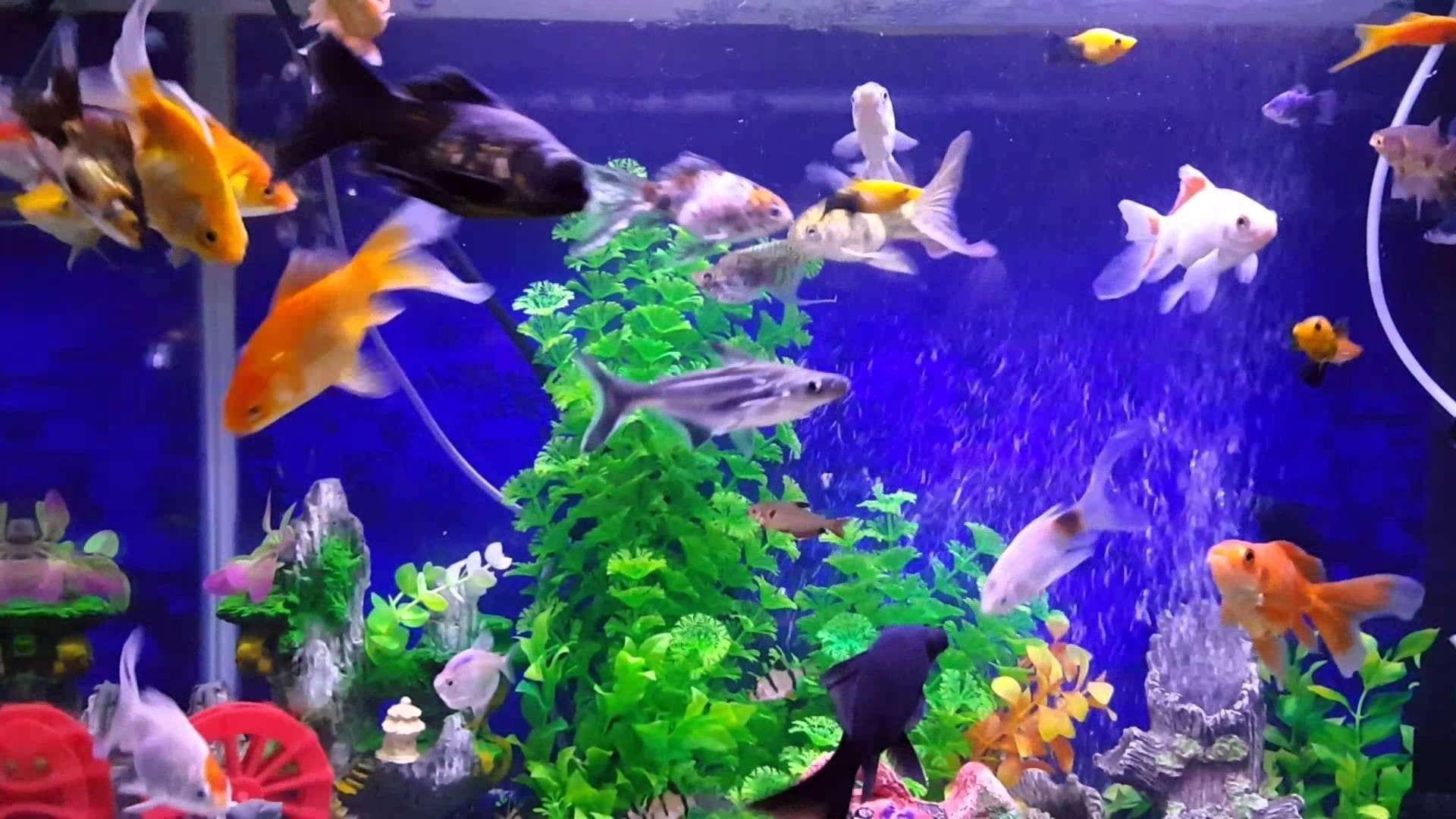 تربية الأسماك