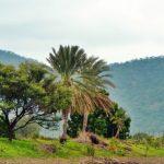 محلية ود الماحي في السودان