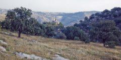 وادي الشتا