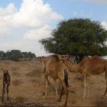 تقسيم ولاية جعلان بني بو علي في سلطنة عمان