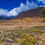 تقسيم ولاية رخيوت في سلطنة عمان