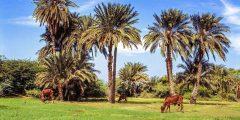 ولاية نهر النيل في السودان