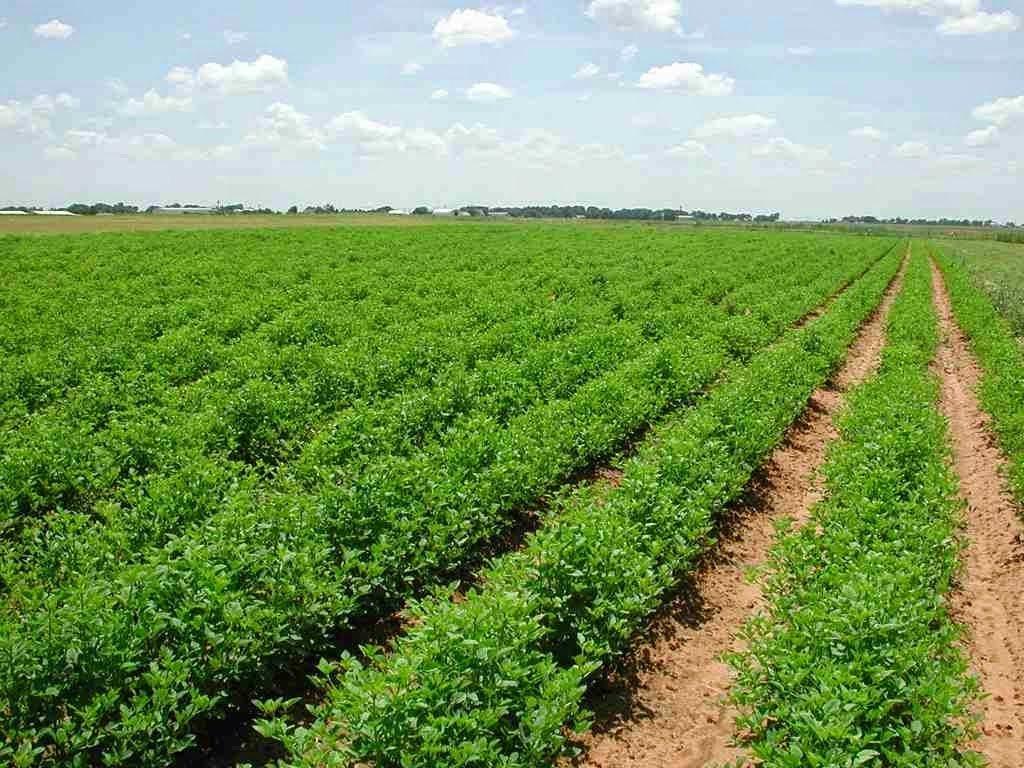 طرق بيع أراضي زراعية
