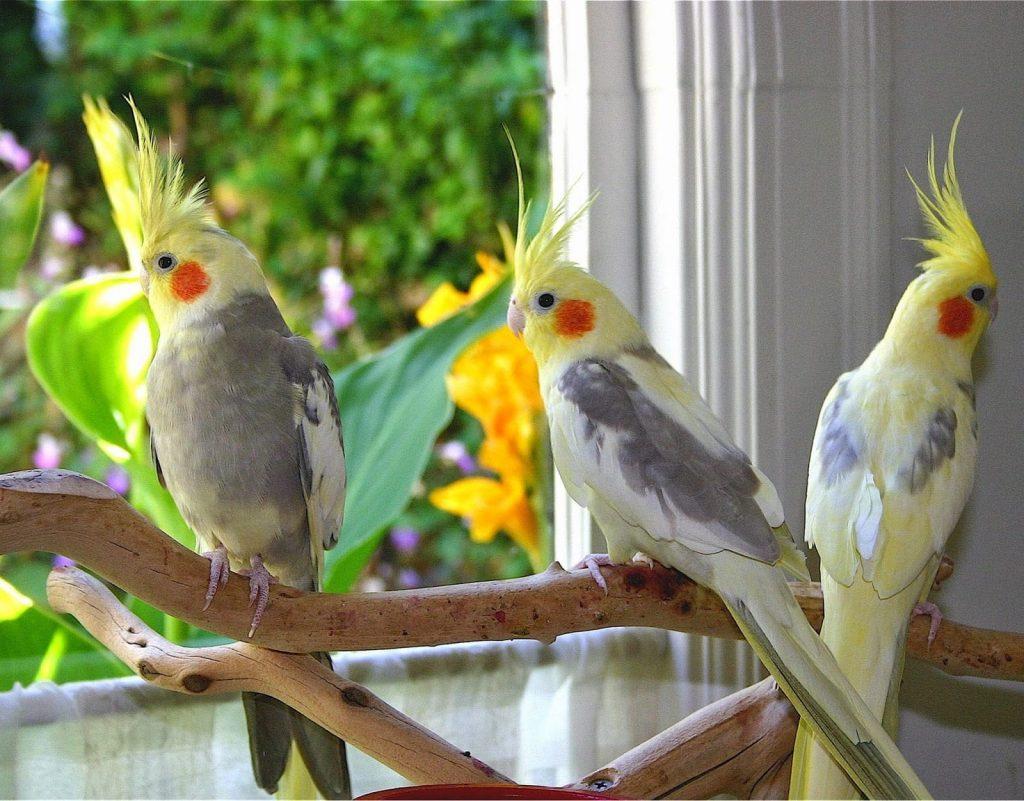 أشهر أنواع طيور اقرأ السوق المفتوح