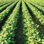 خدمات المزارعين في الإمارات