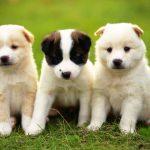 أجمل أنواع الكلاب في العالم