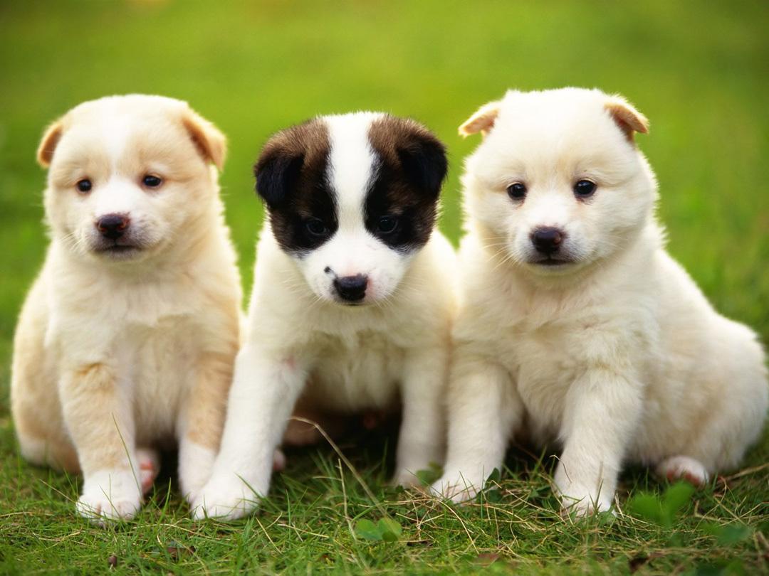 أجمل أنواع الكلاب في العالم اقرأ السوق المفتوح