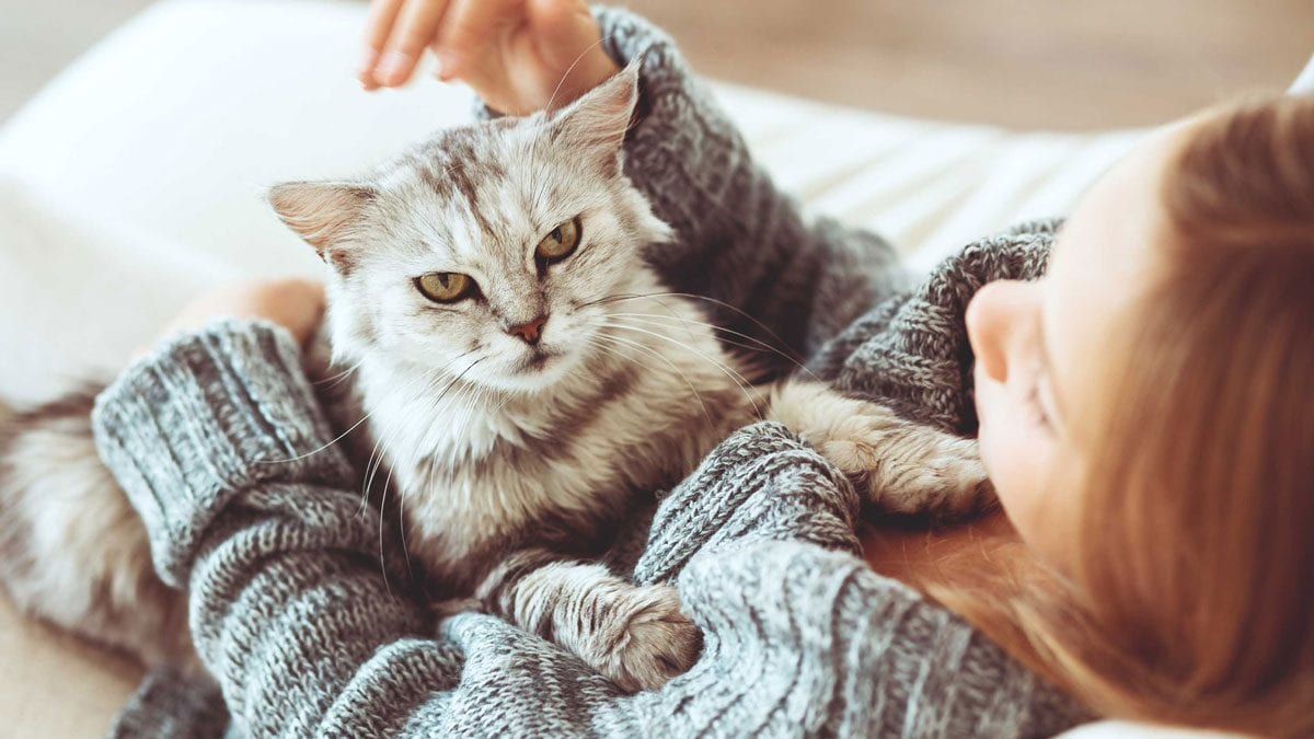 أضرار تربية القطط
