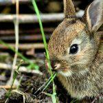أمراض الأرانب وكيفية علاجها