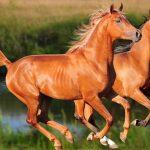 أنواع الأحصنة