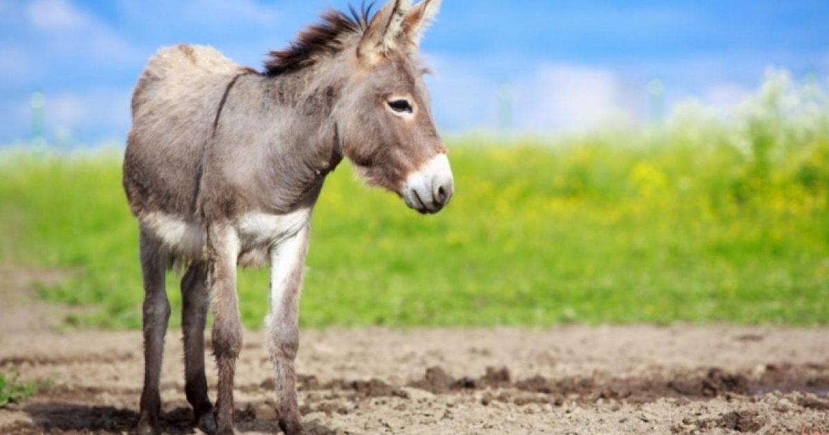 مضحك يمكن حسابها ابق مستيقظا اسم أنثى الحصان Myfirstdirectorship Com
