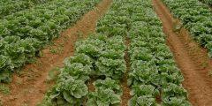 جدول أوقات الزراعة