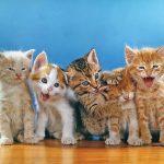 طريقة تربية القطط