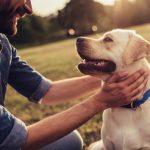 تربية الكلاب على الشراسة