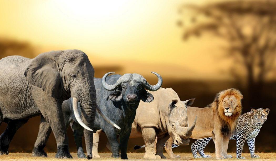 Types of wild animals