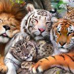 أنواع الحيوانات المفترسة