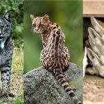 أنواع الحيوانات في العالم
