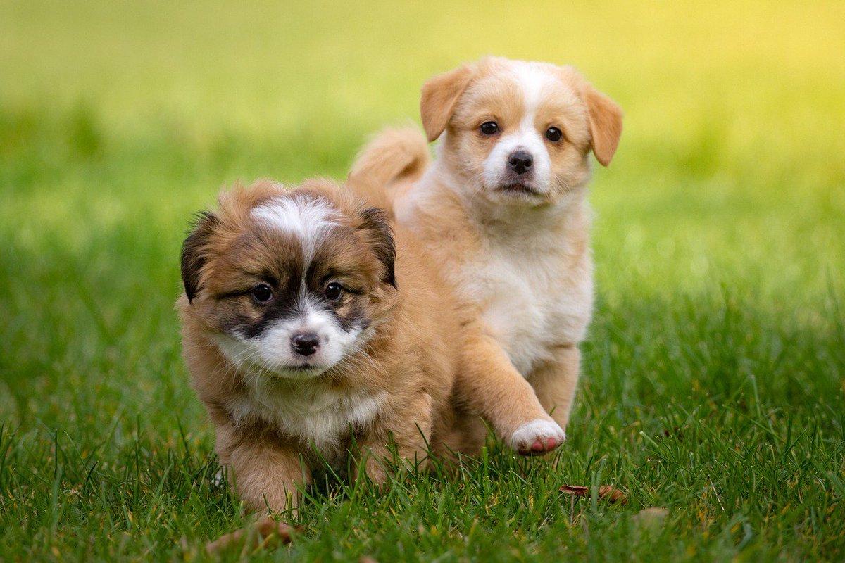 أنواع الكلاب الأليفة اقرأ السوق المفتوح