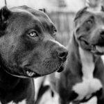 أنواع الكلاب البوليسية