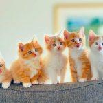 اسم صغير القطة