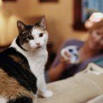 تربية القطط وأضرارها