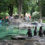 حديقة الحيوان الأكبر في العالم