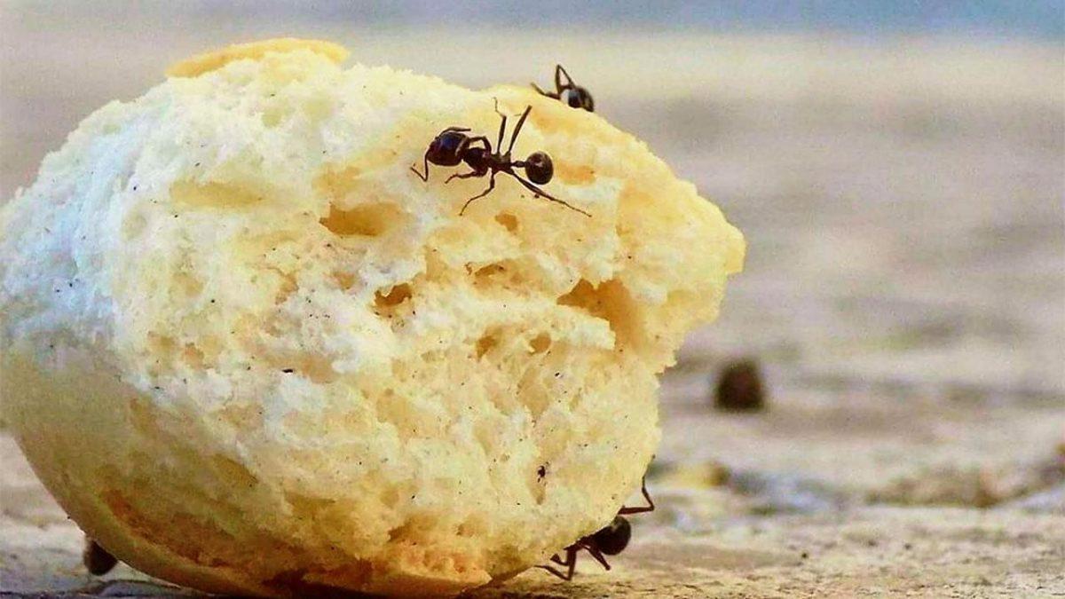 سبب وجود النمل الأحمر في البيت اقرأ السوق المفتوح