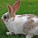 كل ما يخص تربية الأرانب
