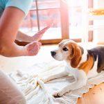 كيفية تربية الكلاب الصغيرة