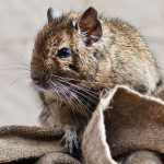 كيف أقضي على الفئران في المنزل