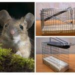 كيف تتخلص من الفئران