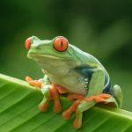كيف تتنفس الحيوانات البرمائية