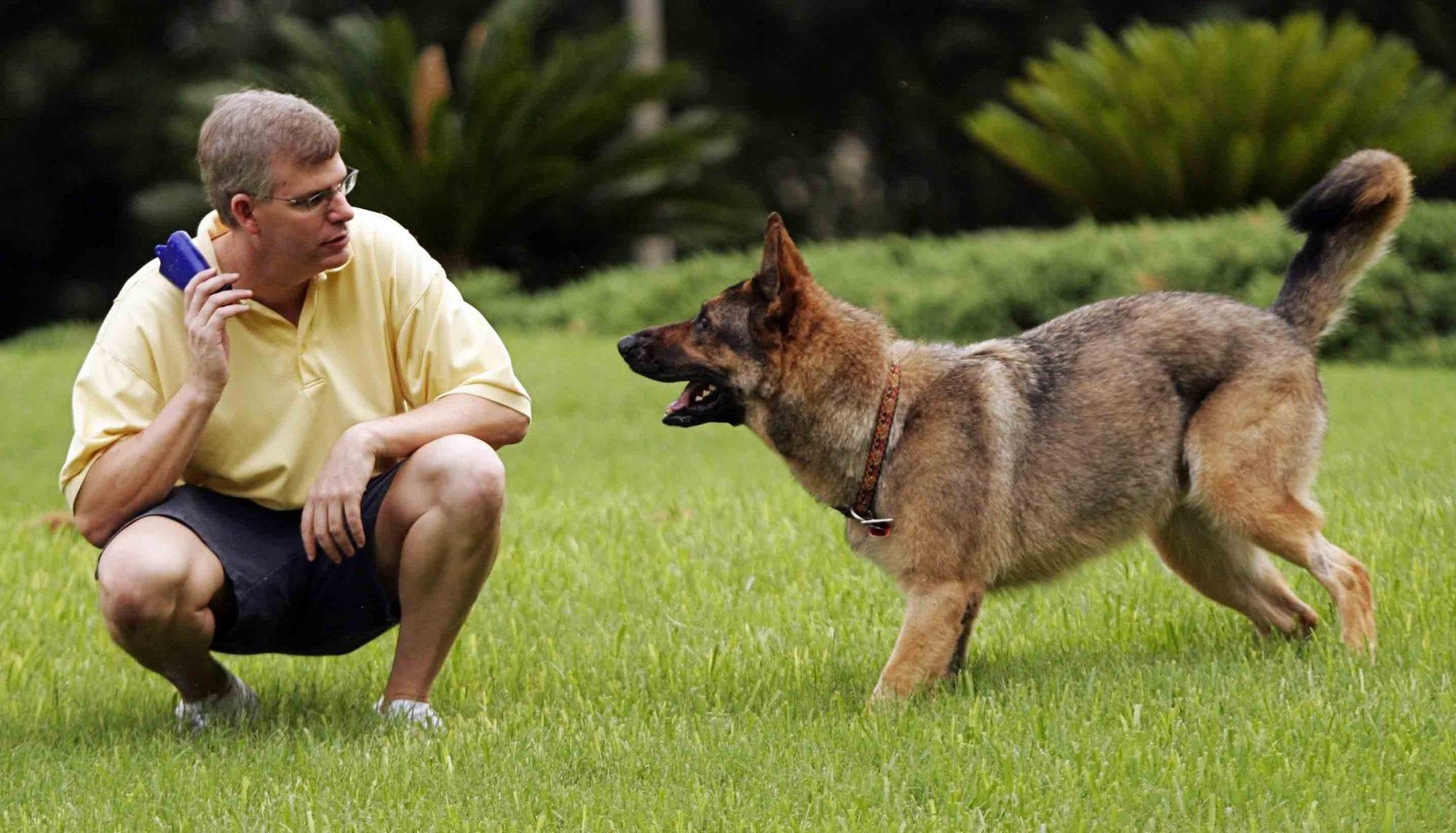 كيف تدرب الكلاب