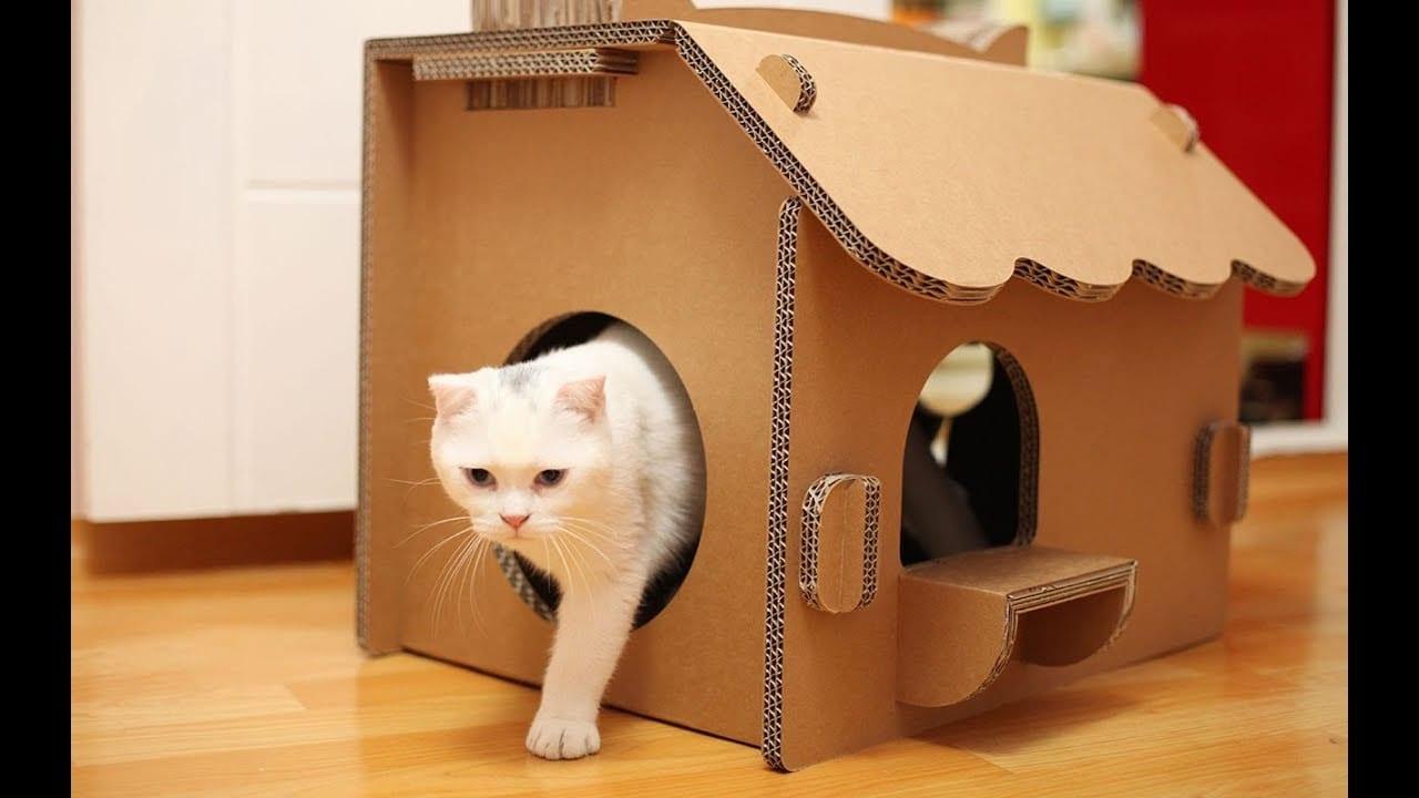 كيف تصنع بيتاً للقطط