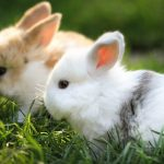 ما هو اسم صغير الأرنب