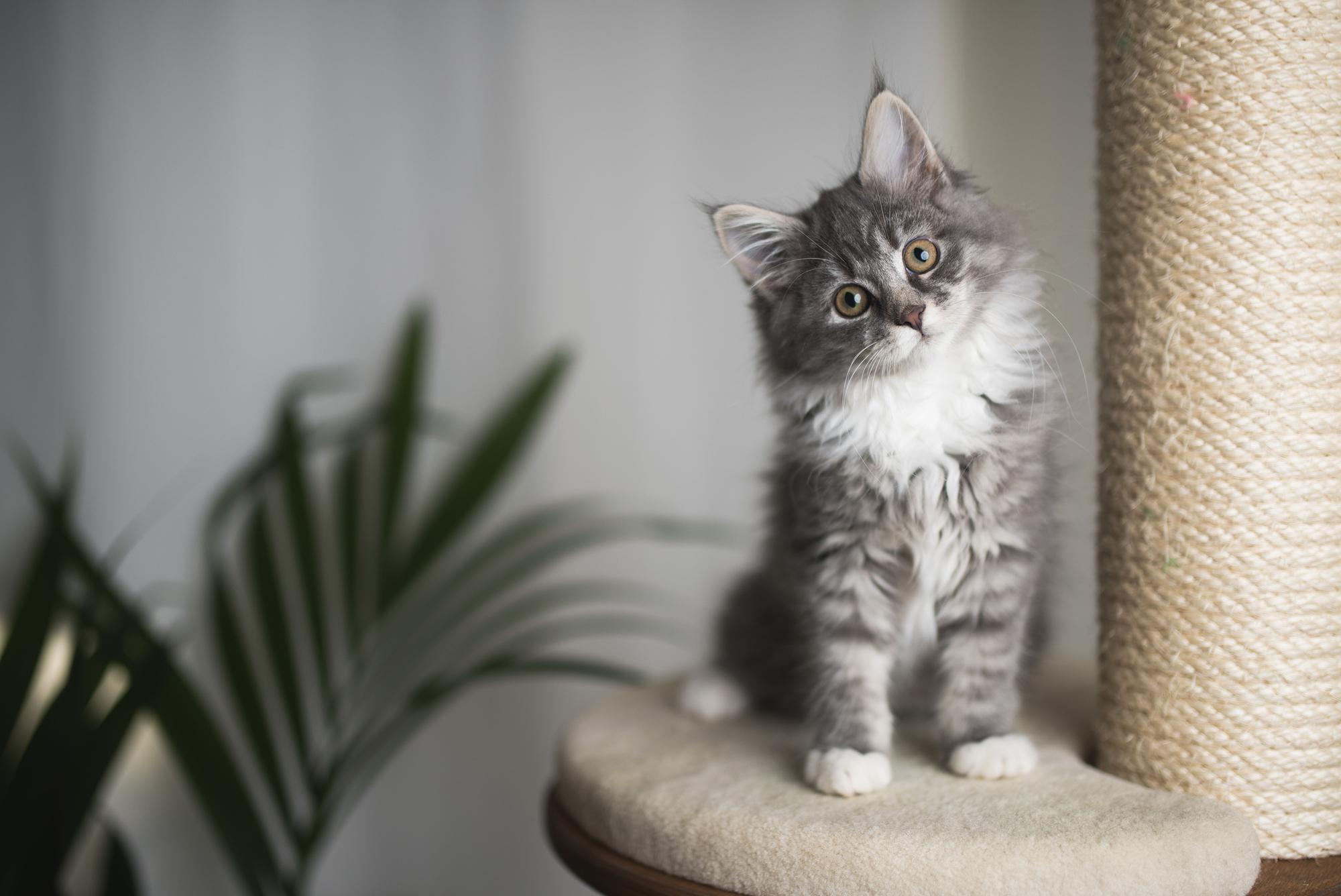 ما هي أمراض القطط