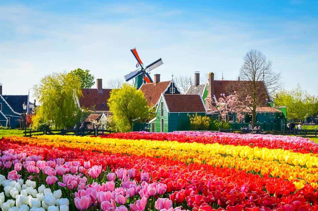 مدينة الطواحين في هولندا