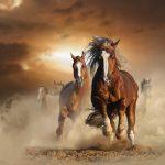 متى يعتبر الحصان مسناً