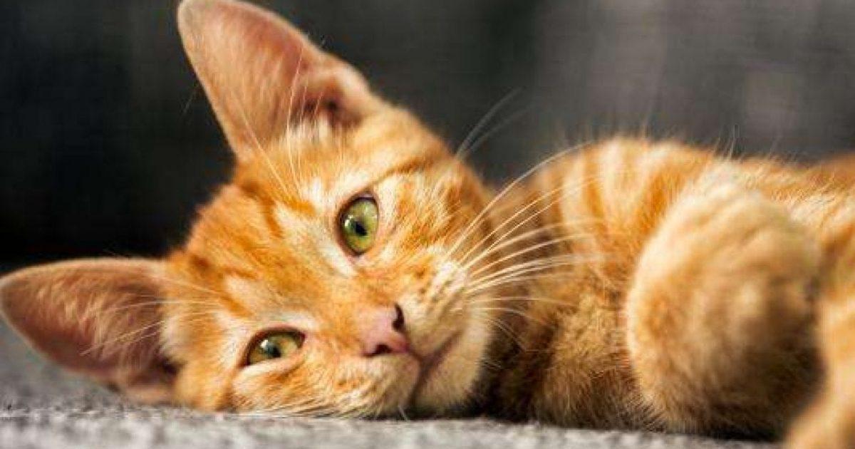 هل شراء القطط حرام اقرأ السوق المفتوح