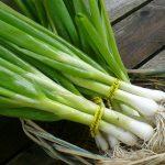 ما هي فوائد البصل الأخضر