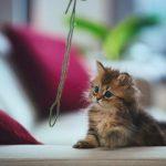 علاج البرد عند القطط