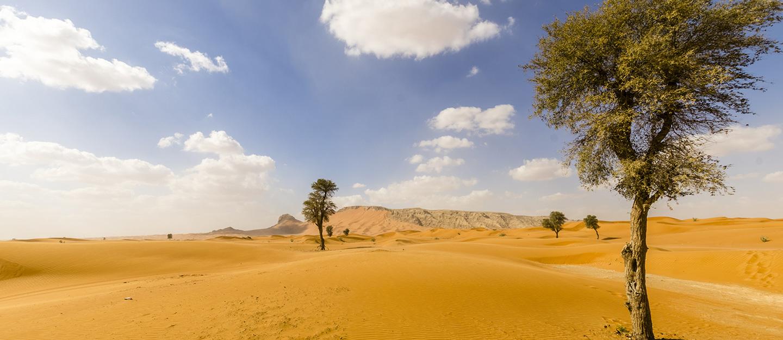 أنواع النباتات المعمرة في الإمارات