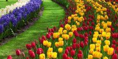 تعرف على أنواع وأسماء الزهور المنزلية